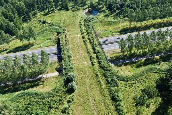 Экодук в России