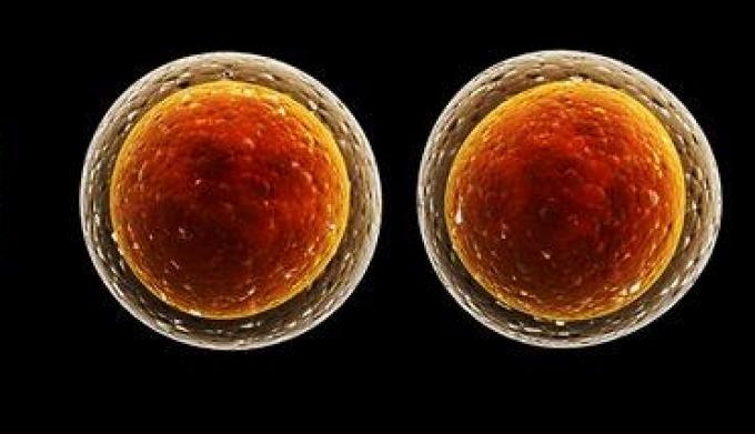 Клетка и ее основные свойства