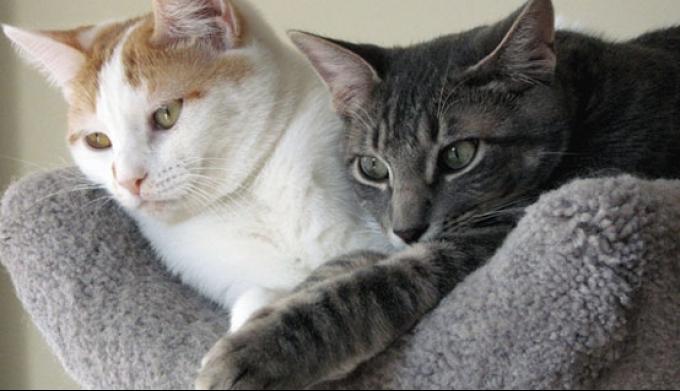 Кошки и уход за ними