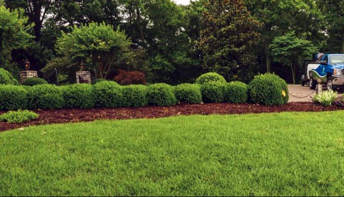 Устройство идеального газона