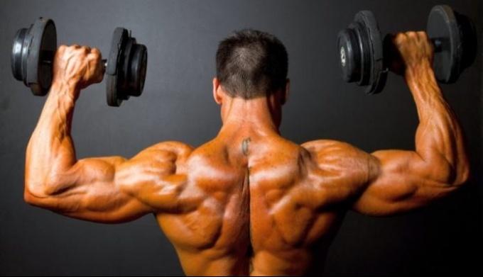 Мышцы. Типы мышц, их строение и значение